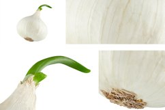 White onion with green sprout. Product Image 2