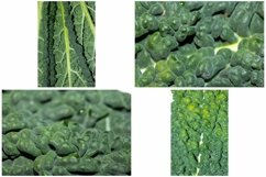 Kale Cabbage Vegetable Photograph Collection Product Image 6