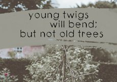 Twigs - A Handwritten Scribble Font Product Image 5