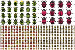 10 Beetle Collection Backgrounds Product Image 2