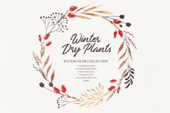 Winter dry plants Product Image 1