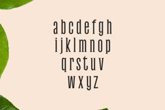 Galvin Slab Serif Font Family Pack Product Image 3