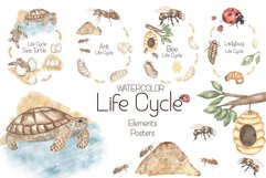 Watercolor Life Cycle Set Product Image 1