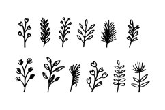 Hand Drawn Leaf Vector Product Image 1