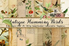 16 Antique Humming Birds Trochilidae Nature Digital Papers Product Image 1