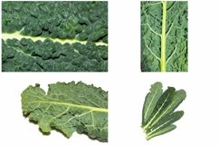 Kale Cabbage Vegetable Photograph Collection Product Image 4