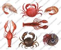 Watercolor Crustacean Clipart. Nautical Clipart Product Image 2
