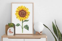 Watercolor sunflowers PNG. Product Image 5