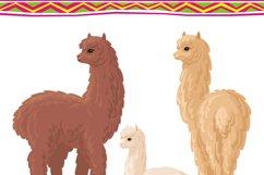 Alpacas. Vector clip arts. Product Image 2