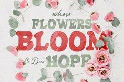 Begonia - Sans Serif Product Image 3