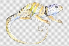 Iguana-1 Watercolor png Product Image 2