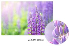 Lupine. Styled stock photo set. Product Image 2