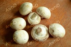 Champignon mushrooms lie on a wooden table. Product Image 1