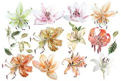 Hand Drawn watercolor flowers lily Product Image 2