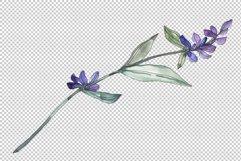 Bouquet summer breeze lavender watercolor png Product Image 6