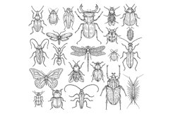 Insects hand drawn. Butterfly, beetle and fly, ant. Dragonfl Product Image 1