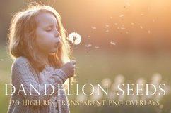 Blowing dandelion seeds photoshop overlays Product Image 1