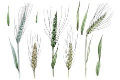 Spike of wheat Watercolor png Product Image 1