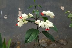 beautiful november flowers charming white in front of the ho Product Image 1