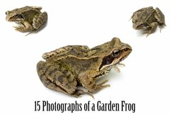 Common Garden Frog 15 Photographs in Different Angles JPG Product Image 1