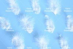 white fluffy bird feathers from a chicken on blue background Product Image 1