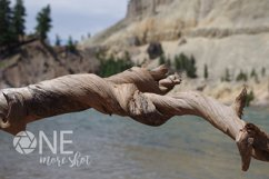 Yellowstone National Park River - Twisted Log - Wyoming Product Image 1