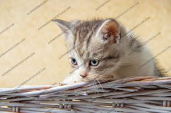 13 photos of little kittens Product Image 6