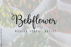 Shafeer -Beauty Font Duo- Product Image 5