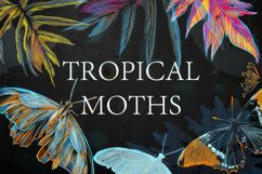 TROPICAL MOTHS patterns Product Image 4