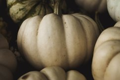 Pumpkins Stock Photo Bundle Product Image 1