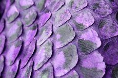 20 Coloured Snake Print Snakeprint Skin Photograph Bundle! Product Image 4