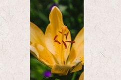 Lily flower photo 5 Product Image 1