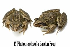 Common Garden Frog 15 Photographs in Different Angles JPG Product Image 2