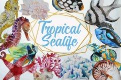 Tropical Sea Life Watercolor Clip Art Product Image 1