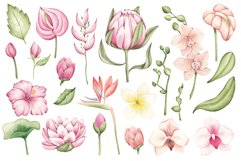 """Watercolor ClipArt """"Tropical Flowers Product Image 2"""