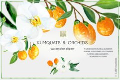 Kumquat & white orchids. Watercolors clipart collection. Product Image 1
