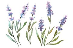 Bouquet of idyll lavender Watercolor png Product Image 1