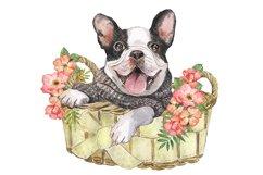 French Bulldog Watercolor dog clipart. Watercolor pet Product Image 3