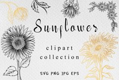 Sunflower clipart collection Product Image 1
