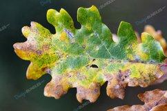 Macro Leaf Product Image 1