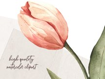Watercolor clipart coral pink Tulips. Floral digital set PNG Product Image 4