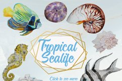 Tropical Sea Life Watercolor Clip Art Product Image 5