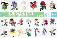 Carnation Clipart Flower Product Image 2