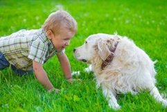 boy with golden retriever Product Image 1