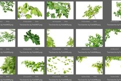 50 Tree Branch Photo Overlays Product Image 6
