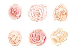Set of watercolor clipart tender romantic flowers roses Product Image 3