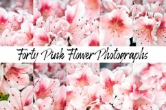 40 Pink Flower Blossom Photographs Close Up Product Image 1
