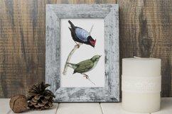 Birds Bundle Vintage Clipart Set Product Image 4