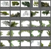 50 Christmas Tree Branch Overlays Product Image 5