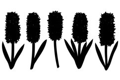 Hyacinths silhouettes. Flowers silhouettes. Hyacinth SVG. Product Image 3